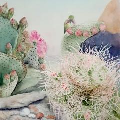 Cactus Hummingbird